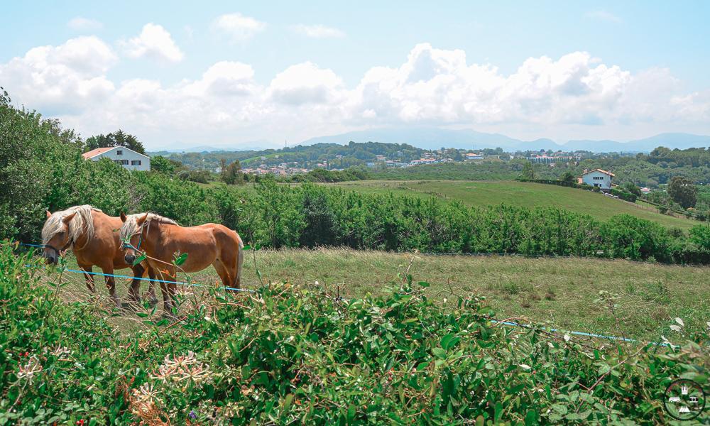 Sentier du littoral au Pays Basque