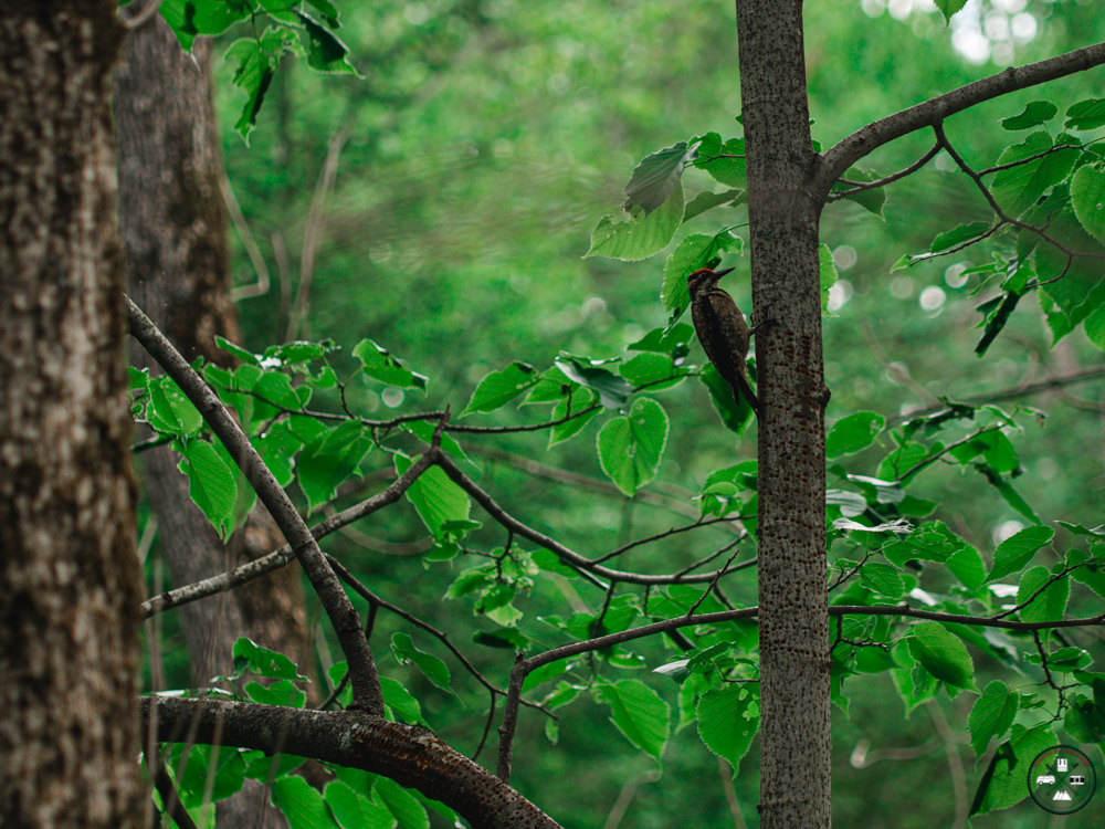Observer la faune au Parc des Chutes Dorwin