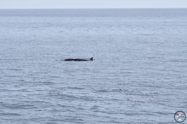 baleine au cap bon désir