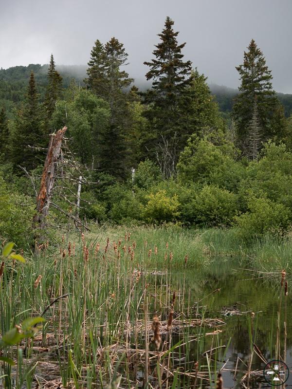 parc national de forillon secteur nord